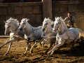 Ben-Hur - Featurette (Chariot Race)