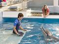 Dolphin Tale 2 - Trailer