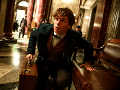 Fantastic Beasts And Where To Find Them - History of Magic Prologue