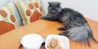 A Kitty's Meowsings: Whole Pet Kitchen: Pet Deli and Bark-ery