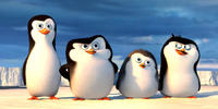 Dreamworks' Penguins Of Madagascar (3D): Reveals First Four Minutes