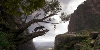 Gravity, Avatar Artists Tap Latest Tech for Disney's The Jungle Book