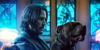 WATCH: John Wick 3 New Trailer Sees Halle Berry and Her Dogs In Action