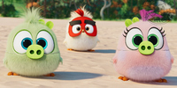 Voices Behind Adorable Hatchlings in 'Angry Birds Movie 2' Unveiled