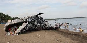 A Dead Whale's Wake-Up Call