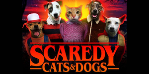 Scaredy Cats & Dogs : Year 16