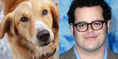 Josh Gad Lends Voice to Bailey, the Narrator in A Dog's Purpose