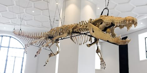 IN PHOTOS: The Newly-Opened National Museum of Natural History in Ermita, Manila
