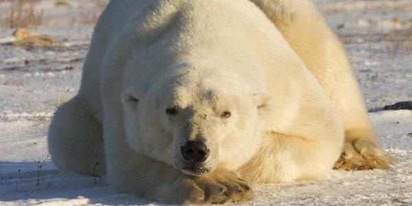 A Monstrous September on Animal Planet