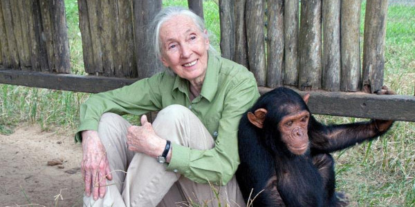 20th Century Fox Partners with the Jane Goodall Institute to Aid in Rehabilitation of Chimpanzees