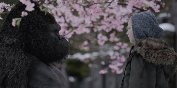 New Movies This Week: War for the Planet of the Apes, Wish Upon and more!