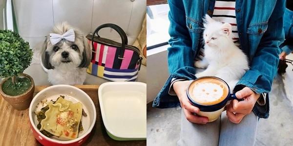 8 Pet-Friendly Restaurants in Metro Manila