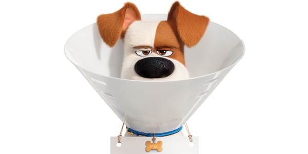 "WATCH: Hero Dog Max Takes Trip to the Vet in First ""The Secret Life of Pets 2"" Trailer"