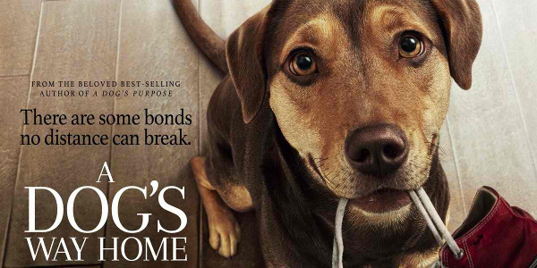 """WATCH: """"A Dog's Way Home"""" New Trailer Further Reveals Heartwarming Tale"""