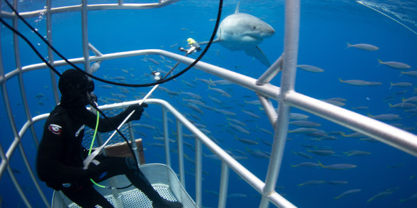 Shark Week Returns with A Sustainability Cause