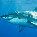Shark Week returns June 27 with jawmazing lineup on Discovery Channel