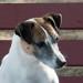 Robot Dog is a Girl's Best Friend - A.R.C.H.I.E in Cinemas June 7