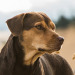 Discover Unconditional Love in A Dog's Way Home