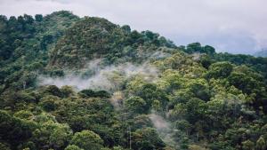 Globe Rainforestation