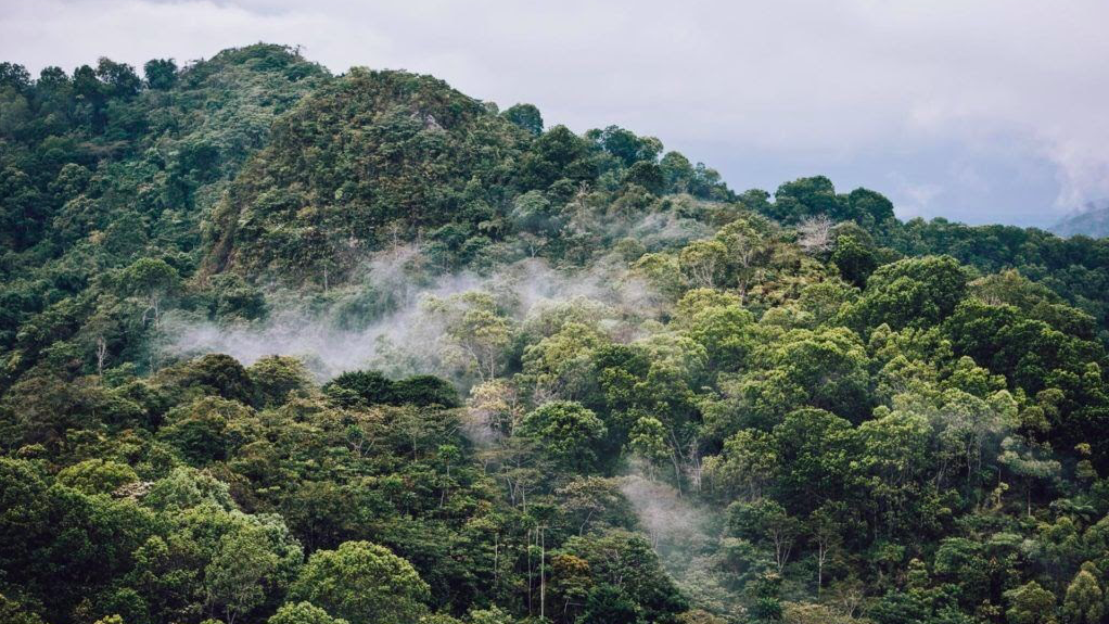 Read more about the article Globe Promotes Rainforestation As Way To Combat Effects of Climate Change and Natural Hazards