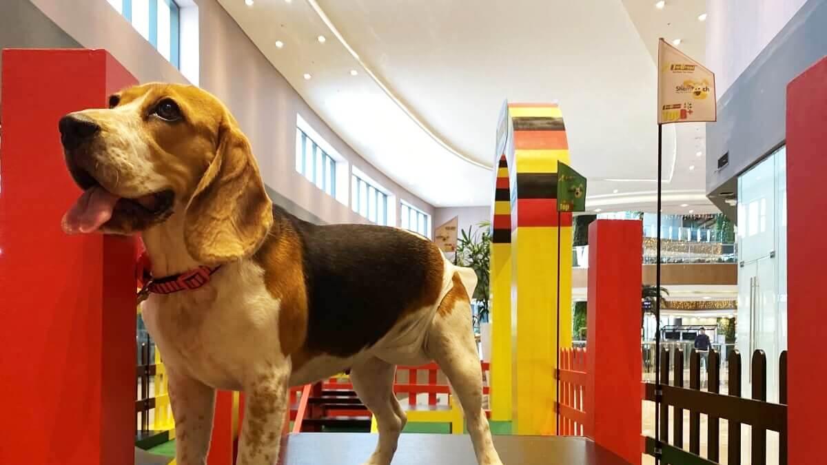 Robinsons Malls Opens Its Second Indoor Pet Park in Cebu!