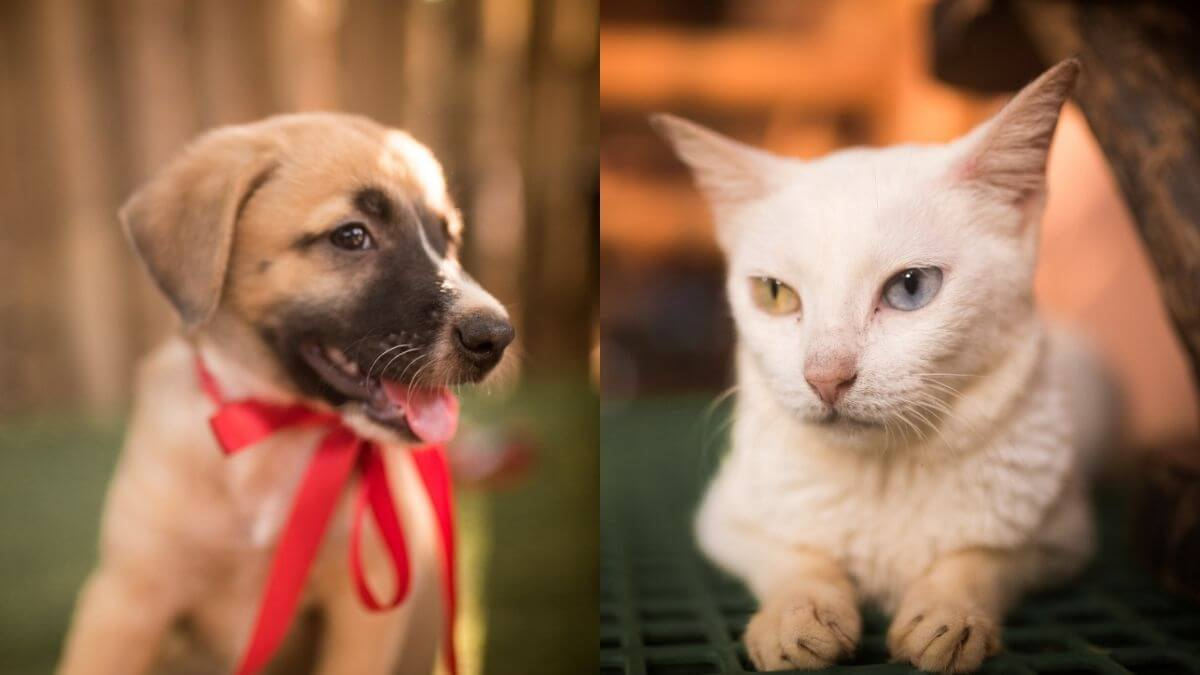 Read more about the article Cats & Puppies in Search of their Furever Home will be Up for Adoption at Robinsons Magnolia This Saturday